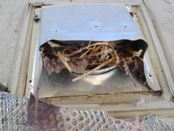 Birds nest in vent chicagoland air duct cleaning