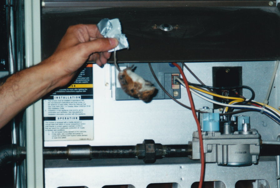 Dead Mouse Chicagoland Air Duct Cleaning Indoor Air