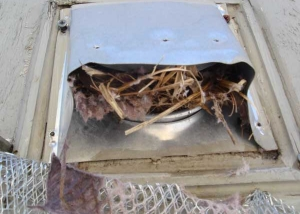 Birds nest in a dryer vent we cleaned