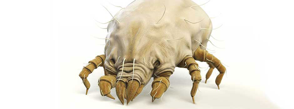 We Clean dust mites that cause allergies